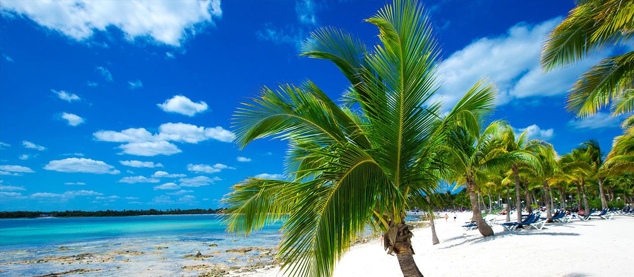 норм пальм